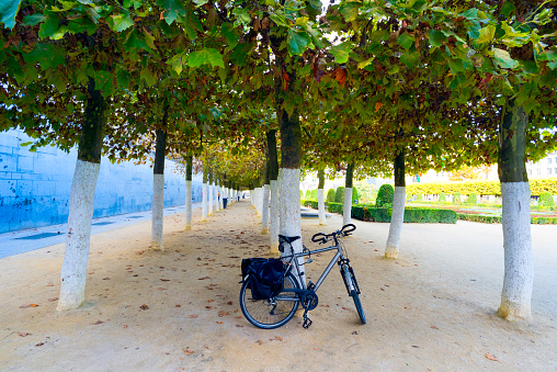 """Whitewashed「Bicycle attached on a tree in the park of the Kunstberg or Mont des Arts (French, meaning """"hill/mount of the arts"""", Brussels, Belgium.」:スマホ壁紙(12)"""