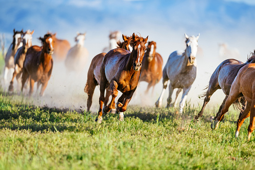 Horse「Wild mustang horses galloping in Utah, USA」:スマホ壁紙(8)
