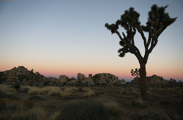 Land「National Parks Threatened As Government Shutdown Continues」:写真・画像(13)[壁紙.com]