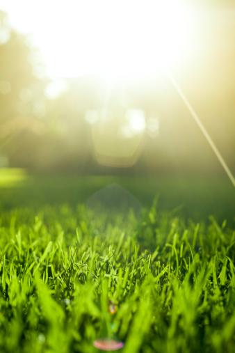 イースター「草背景に沈む夕日」:スマホ壁紙(4)
