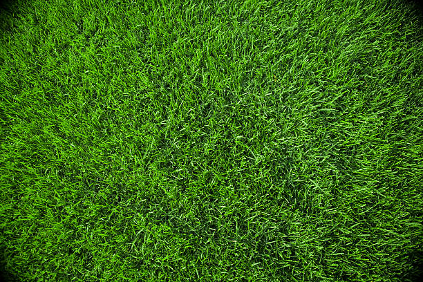 Grass Background:スマホ壁紙(壁紙.com)