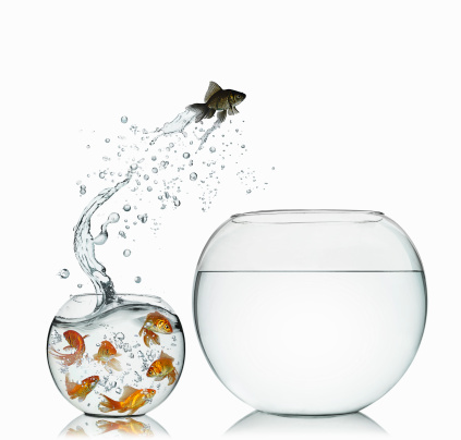 Fishbowl「Black Goldfish」:スマホ壁紙(12)