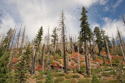 Willamette National Forest「Fall Color」:スマホ壁紙(8)