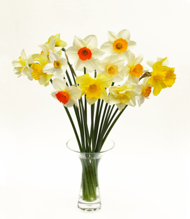 flower「Selection of different daffodils in vase on white」:スマホ壁紙(4)