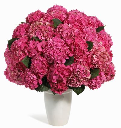 カーネーション「Selection of pink flowers in vase, still life」:スマホ壁紙(1)