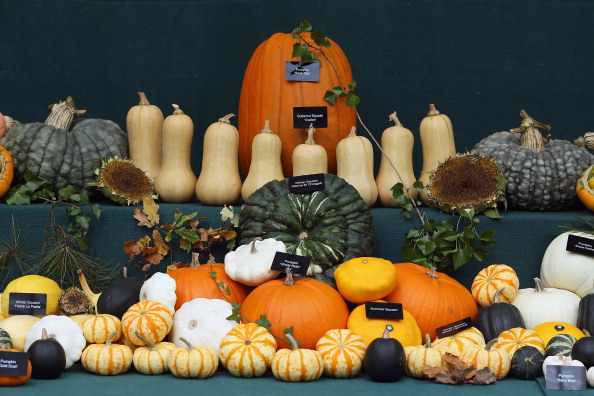 Agricultural Activity「Growers And Enthusiasts Enjoy The RHS London Harvest Festival Show」:写真・画像(9)[壁紙.com]