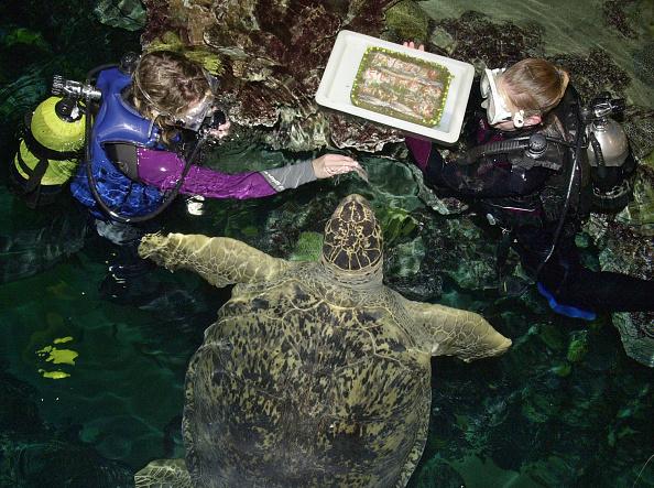 Raw Food「Six Hundred Pound Turtle Turns 63」:写真・画像(18)[壁紙.com]