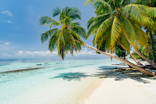 South Asia「Paradisiac beach at Maldives」:スマホ壁紙(9)