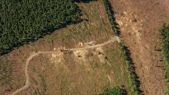 Deforestation「Truck carrying logs」:スマホ壁紙(7)