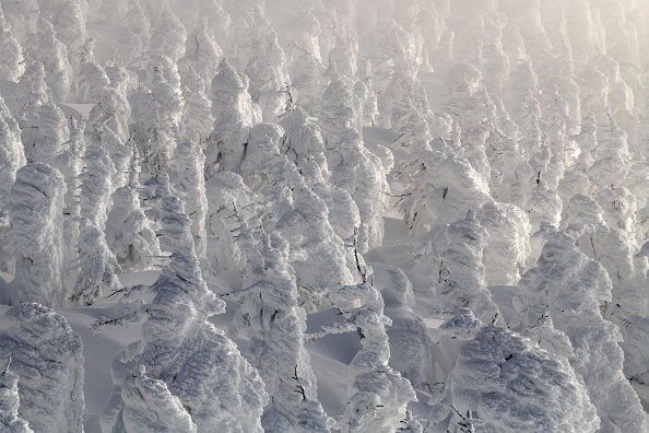 ヒューマンインタレスト「The Snow Monsters Of Mount Zao」:写真・画像(18)[壁紙.com]