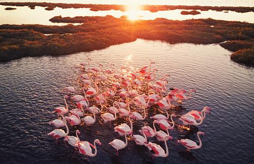 Turkey - Bird「Flamingos in Wetland During Sunset」:スマホ壁紙(10)