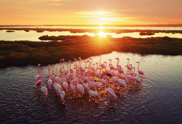 Flamingos in Wetland During Sunset:スマホ壁紙(壁紙.com)