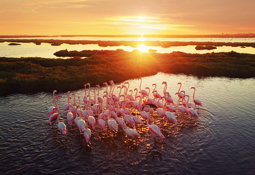 Animal Wildlife「Flamingos in Wetland During Sunset」:スマホ壁紙(17)