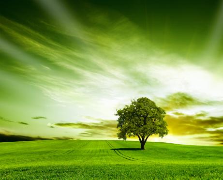 Single Tree「Green landscape」:スマホ壁紙(16)