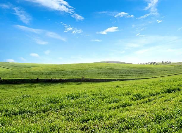 green landscape:スマホ壁紙(壁紙.com)
