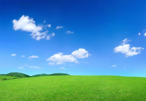 Single Tree「Green Landscape」:スマホ壁紙(4)