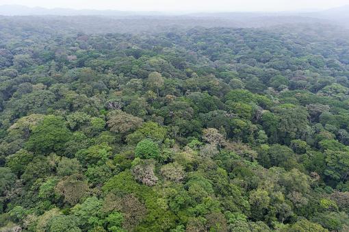 コンゴ民主共和国「Green landscape with rainforest, Democratic Republic of the Congo」:スマホ壁紙(18)