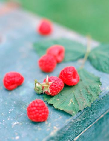 Natural Condition「Fresh raspberries and leaf」:スマホ壁紙(13)