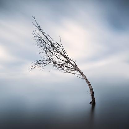 Bending「Bent bare tree standing in lake at wintertime」:スマホ壁紙(11)