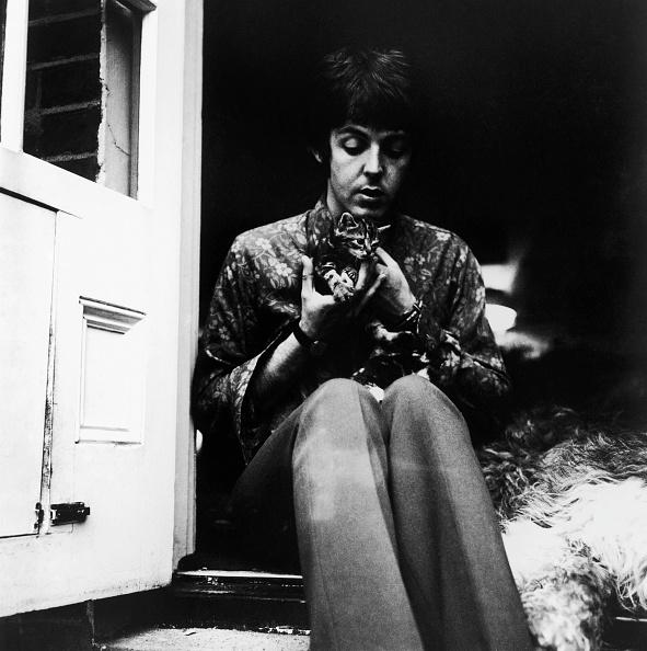 猫「McCartney's Kitten」:写真・画像(10)[壁紙.com]
