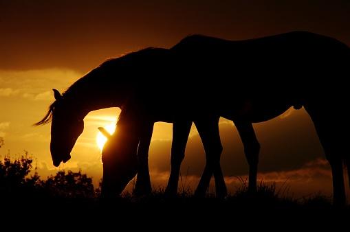 Stallion「Horses at sunset」:スマホ壁紙(6)