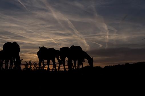 Horse「Horses at sunset」:スマホ壁紙(4)