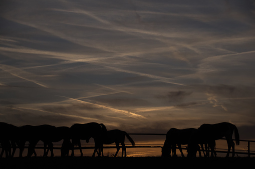 Horse「Horses at sunset」:スマホ壁紙(6)