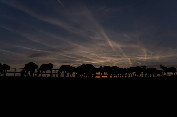 Horses at sunset:スマホ壁紙(壁紙.com)