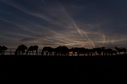 Horse「Horses at sunset」:スマホ壁紙(5)