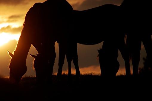 Stallion「Horses at sunset」:スマホ壁紙(7)