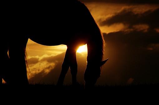 Stallion「Horses at sunset」:スマホ壁紙(5)
