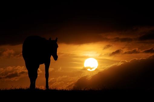 Stallion「Horses at sunset」:スマホ壁紙(8)
