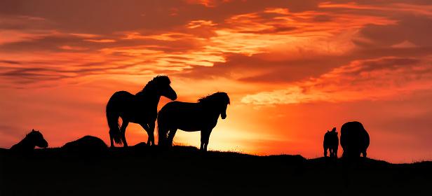 Stallion「Horses at sunset.」:スマホ壁紙(15)