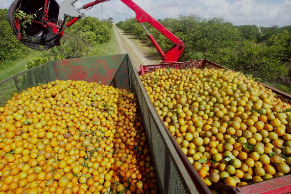 Orange - Fruit「Florida Citrus Production To Be Among Worst In A Decade」:写真・画像(17)[壁紙.com]