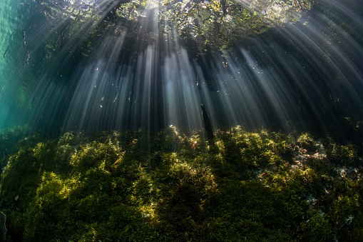 Lagoon「Beams of sunlight descend into the shadows of a blue water mangrove forest in Raja Ampat, Indonesia.」:スマホ壁紙(16)