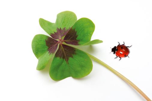 Good Luck Charm「Ladybird and four-leaved clover」:スマホ壁紙(14)