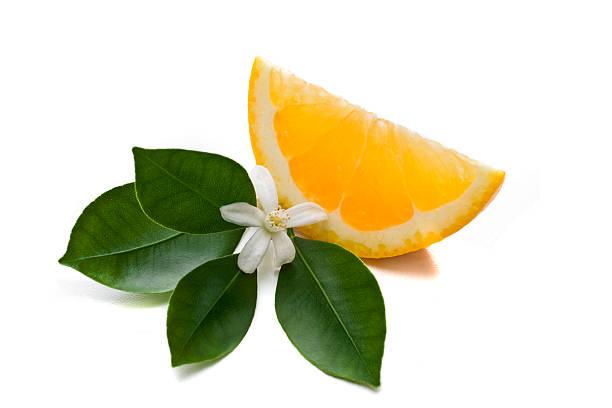 Orange slice:スマホ壁紙(壁紙.com)