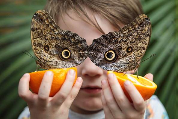Butterfly - Insect「The Natural History Museum's Sensational Butterflies Exhibition Prepares To Open To The Public」:写真・画像(0)[壁紙.com]
