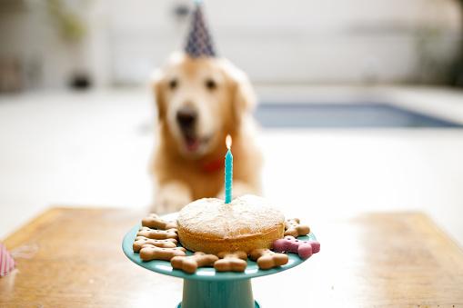 Birthday「Happy birthday dog」:スマホ壁紙(18)