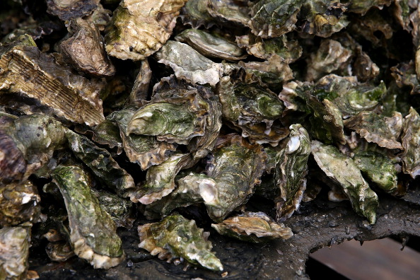 Wilderness Area「Oyster Farmers Begin To Wind Down Operations After Feds End Nat'l Seashore Lease」:写真・画像(10)[壁紙.com]