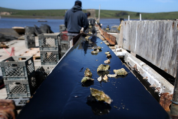 Wilderness Area「Bay Area Oyster Farm Takes Appeals Of Federal Waters Use Case To Supreme Court」:写真・画像(16)[壁紙.com]