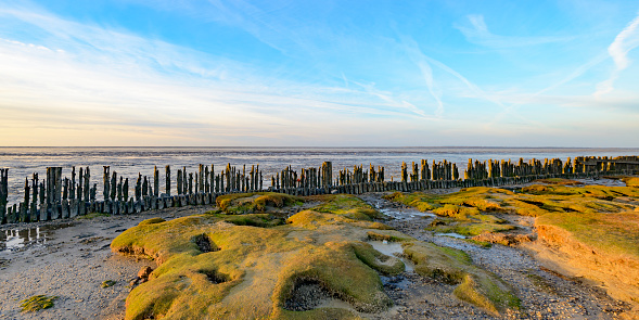 UNESCO「Old land reclamation poles on the tidal flats during sunset」:スマホ壁紙(19)