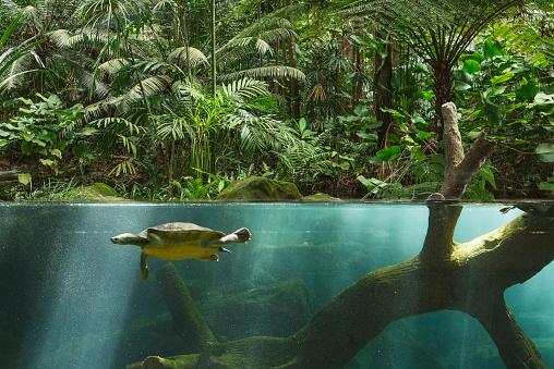 River「Jurong Bird Park, Singapore」:スマホ壁紙(9)