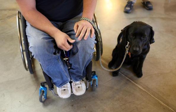 Disability「Service Dogs Aid War Veterans Upon Return To U.S.」:写真・画像(7)[壁紙.com]