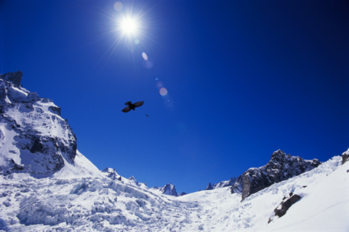 Blanche Vallee「France, Chamonix, Glacier de la Vallee Blanche, jackdaw in flight」:スマホ壁紙(12)