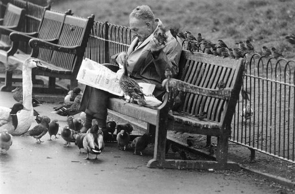 Bench「Pigeon Fancier」:写真・画像(0)[壁紙.com]