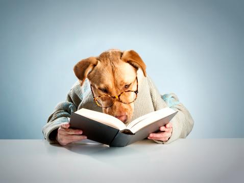 Imagination「Dog reading」:スマホ壁紙(2)