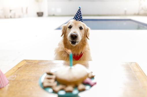Birthday「Dog blowing cake candle」:スマホ壁紙(2)