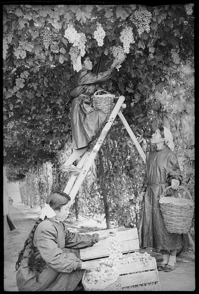 Tashkent「Harvesting」:写真・画像(3)[壁紙.com]