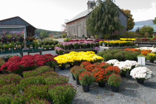 Garden Center「Garden Center in the Autumn」:スマホ壁紙(18)